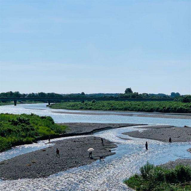 三面川の写真