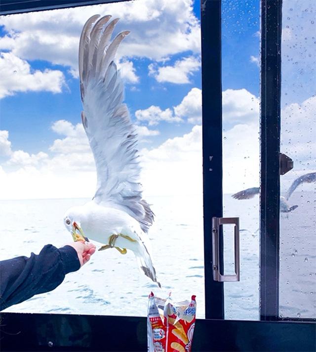 鳥におやつをあげている画像