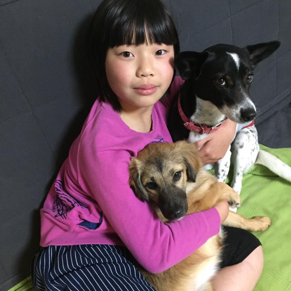 nagata_dogs