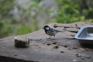 高知県の小さな野鳥のレストラン